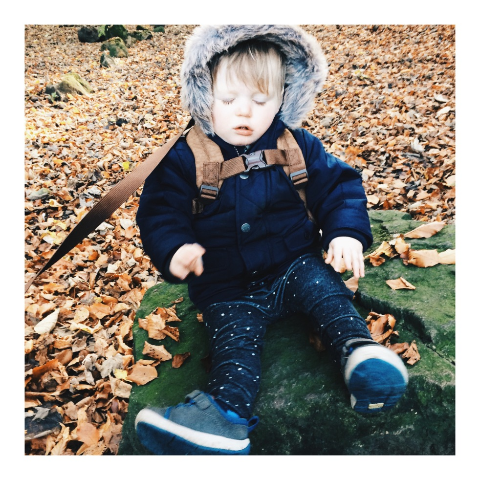 boy toddler woods autumn fall leaves walk parka